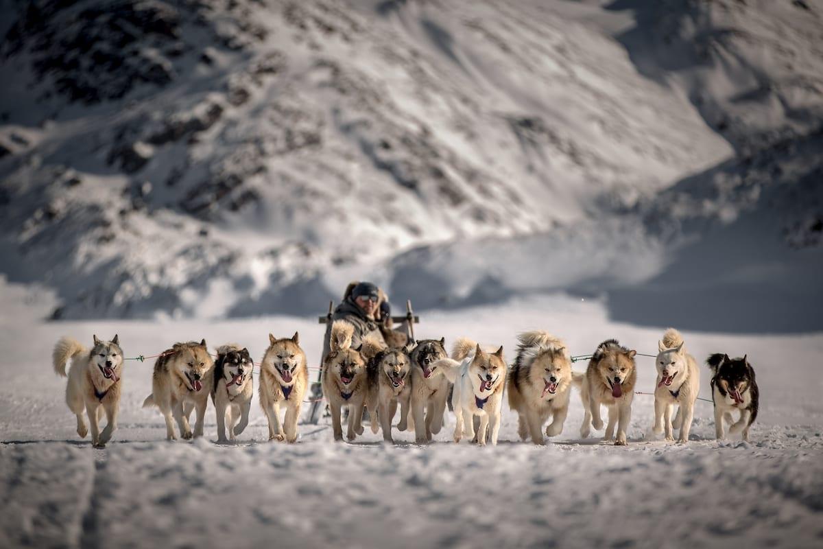 Et spand hunde og deres